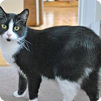 Adopt A Pet :: Tanis - Mississauga, Ontario, ON
