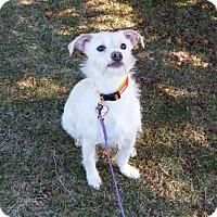 Adopt A Pet :: Spring - Mukwonago, WI