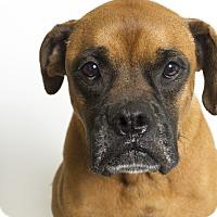 Adopt A Pet :: Saint - Baton Rouge, LA