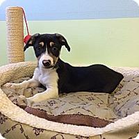 Adopt A Pet :: Michael - New York, NY
