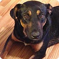 Adopt A Pet :: Maddie - Hagerstown, MD