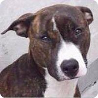 Adopt A Pet :: Daisy - Naples, FL