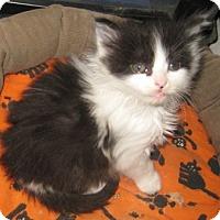 Adopt A Pet :: Panda - Dallas, TX