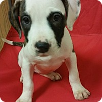 Adopt A Pet :: Galaxy - Lima, OH
