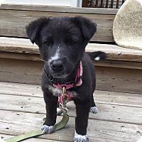 Adopt A Pet :: Lola - Pending - Saskatoon, SK