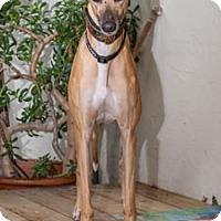 Adopt A Pet :: Diva - Walnut Creek, CA