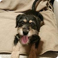 Adopt A Pet :: Jordan - Brea, CA