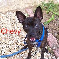 Adopt A Pet :: Chevy - Marianna, FL