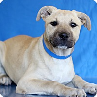 Adopt A Pet :: Theodore - Waldorf, MD
