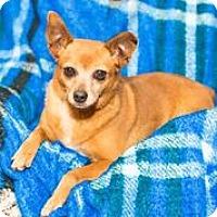 Adopt A Pet :: A - JEWLEE - Raleigh, NC