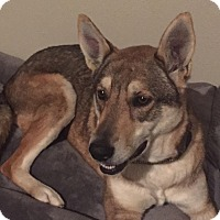 Adopt A Pet :: Layla - Gig Harbor, WA