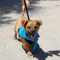 Adopt A Pet :: Dougie - Ventura, CA