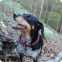 Adopt A Pet :: Mae Bea - Staunton, VA