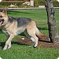 Adopt A Pet :: Valentine - Altadena, CA