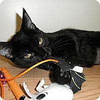 Adopt A Pet :: Damsel - Milwaukee, WI