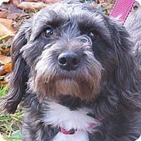 Adopt A Pet :: Eloise - Kittery, ME