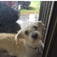 Adopt A Pet :: Rescue volunteers needed now! - Whiteville, NC