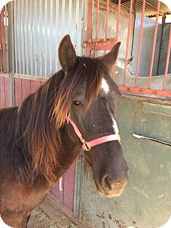 Pony - Other/Mustang Mix for adoption in Tucson, Arizona - Nugget