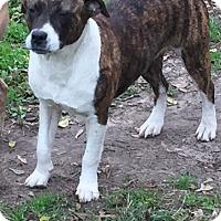 Adopt A Pet :: Baylee - Haggerstown, MD