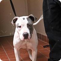 Adopt A Pet :: Mercedes - Daytona Beach, FL