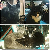 Adopt A Pet :: Electra and Storm - Waldorf, MD