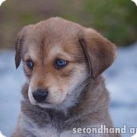 Adopt A Pet :: Willow - Rosamond, CA