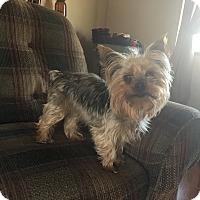 Adopt A Pet :: Sparky 4yr Adopted - Mentor, OH