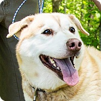 Adopt A Pet :: Requista - Clarkesville, GA