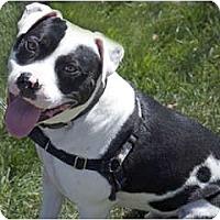 Adopt A Pet :: Freddy - Reisterstown, MD