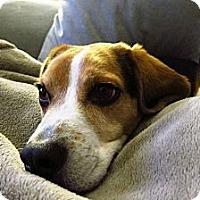 Adopt A Pet :: Paco - Montreal, QC