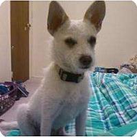 Adopt A Pet :: Hamilton - Lake Forest, CA