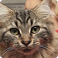 Adopt A Pet :: Frankie Lynn Park - Lombard, IL