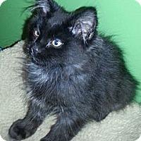 Adopt A Pet :: Fiesta - Clearfield, UT