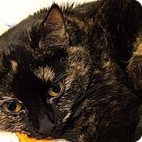 Adopt A Pet :: Pixie - Alexandria, VA