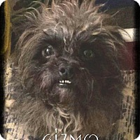 Adopt A Pet :: Gizmo - Crandall, GA