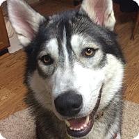 Adopt A Pet :: Romeo - Horsham, PA
