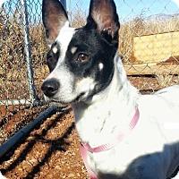 Adopt A Pet :: Jackie - Alamogordo, NM