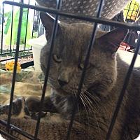 Adopt A Pet :: Joshua - Clay, NY