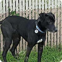 Shepherd (Unknown Type)/Terrier (Unknown Type, Medium) Mix Dog for adoption in Dallas, Texas - zzFannie