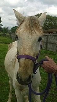 Quarterhorse Mix for adoption in Hitchcock, Texas - Garth