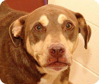 Hound (Unknown Type)/Rottweiler Mix Dog for adoption in McDonough, Georgia - ROMAN