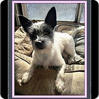 Adopt A Pet :: Jazzie - Rancho Cucamonga, CA