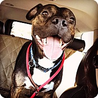 Adopt A Pet :: Lawson! DNA tested - Eastpointe, MI