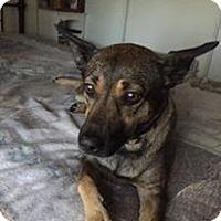Adopt A Pet :: Ami - Yuba City, CA