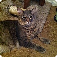 Adopt A Pet :: Pumba - Lauderhill, FL