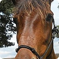 Adopt A Pet :: Carisma - Fredericskburg, VA