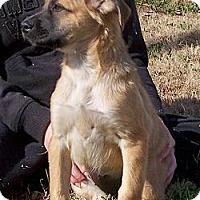 Adopt A Pet :: Misty - Byrdstown, TN