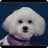 Adopt A Pet :: Chelsea - Fort Braff, CA
