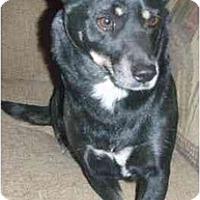 Adopt A Pet :: Flower - Gilbert, AZ