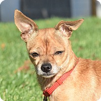Adopt A Pet :: Ronnie - Meridian, ID